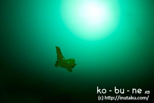 海中に浮かぶ海藻