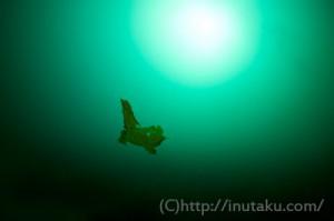 静かな海藻