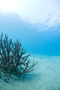dreamin_underwater_20120413