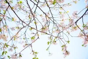 spring_has_come_20120412