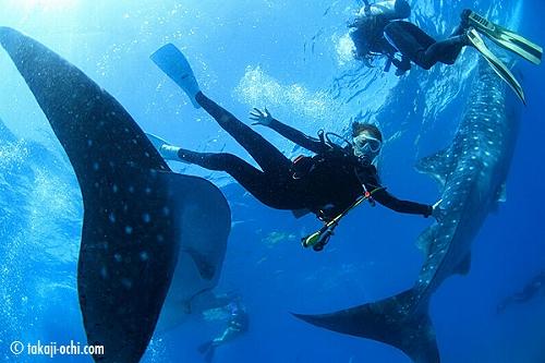 ジンベイザメだらけのセブ島の海と、ダイバー